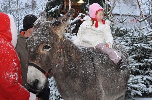 Kind mit Esel in der Weihnachtsbaum Erlebniswelt