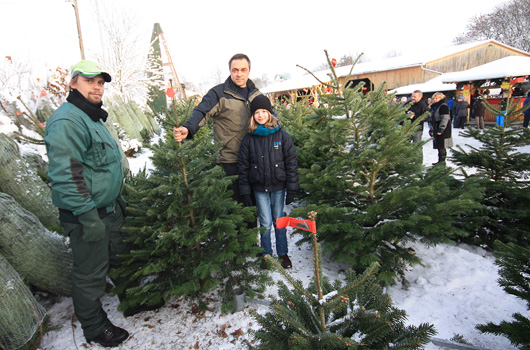 Familien beim Weihnachtsbaumkauf