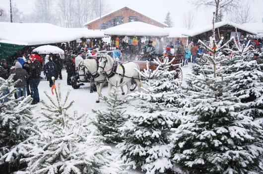Die Weihnachtsbaum Erlebniswelt mit Schneefall